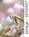 昆虫 カマキリ オオカマキリの写真 18702657