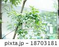 葉 緑 植物の写真 18703181