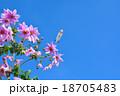 皇帝ダリアと飛行船 18705483