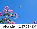 皇帝ダリアと飛行船 18705486