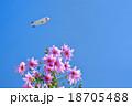 皇帝ダリアと飛行船 18705488