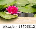 Red lotus 18706812