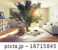 リビングルーム 樹木 樹のイラスト 18715845