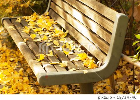 イチョウ並木のベンチ 18734746
