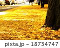 イチョウ並木 18734747