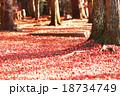 季節替わり 木々の枯葉 18734749