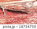 季節替わり 木々の枯葉 木の根っこ 18734750