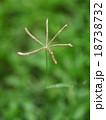 brown yellow grass flower on green field 18738732