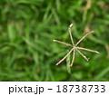 brown yellow grass flower on green field 18738733