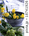 春 チューリップ 18741926