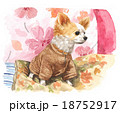 chihuahua151121pix7 18752917