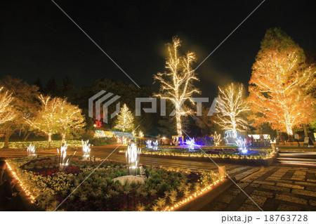 武蔵丘陵森林公園 紅葉見ナイト 18763728