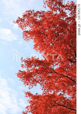 青空に紅い葉 18768276