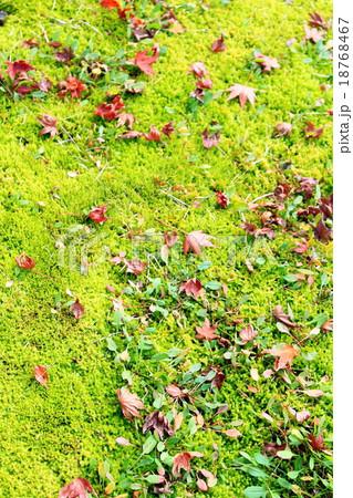 苔の上の紅葉 18768467