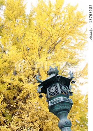鮮やかな銀杏と灯籠 18768582