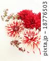 フラワーアレンジメント ダリア 花の写真 18776503