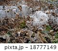 霜柱 18777149