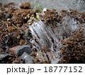 霜柱 18777152