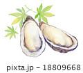 牡蠣 18809668