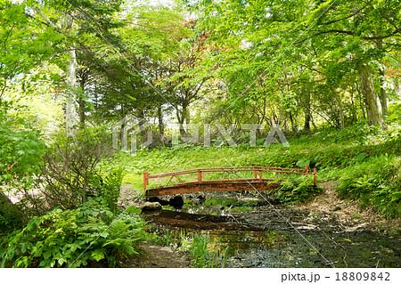 小さな沼に架かる小さな橋 18809842
