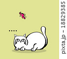 Vector of Cute White Chubby Cat with butterfly 18829385