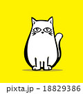 Vector of Cute White Chubby Cat  18829386