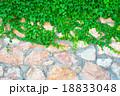 緑 石 ストーンの写真 18833048