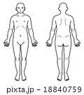 人体 人物 正面のイラスト 18840759