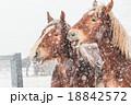 冬の馬 18842572
