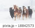 冬の馬 18842573
