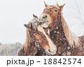 冬の馬 18842574