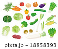 野菜いろいろ 18858393