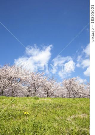 桜 18865001