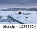 知床の流氷 18865624