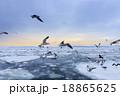 知床の流氷 18865625