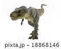 歩いているティラノサウルス 18868146