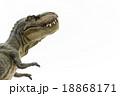不思議がるティラノサウルス 18868171