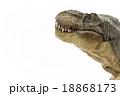 見つめるティラノサウルス 18868173