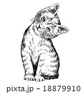 ねこ ネコ 猫のイラスト 18879910