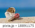 南国のビーチとヤドカリ 18891175