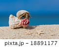 南国のビーチとヤドカリ 18891177