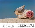 南国のビーチとヤドカリ 18891178