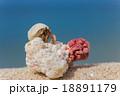 南国のビーチとヤドカリ 18891179