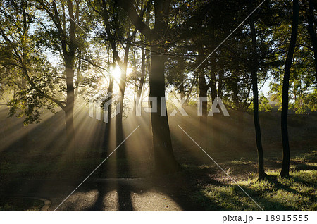 Sunny forest early in the morning / 秋の朝日と朝霧 18915555