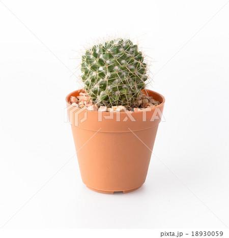 Cactus Isolate on white background 18930059