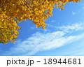 イチョウの黄葉 18944681
