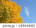 イチョウの黄葉 18944682
