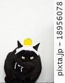 黒猫と手編みの鏡餅 18956078