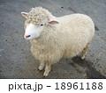 羊 18961188