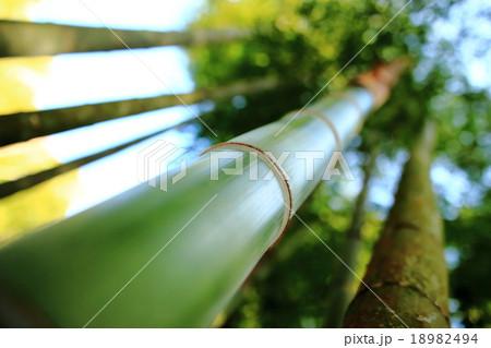 ローアングルからの竹 18982494